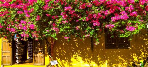 Không gian sống ấn tượng với giàn hoa giấy trước hiên nhà