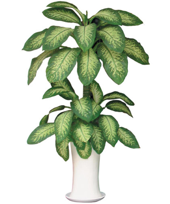 8 loại cây cảnh quen thuộc chứa chất độc không nên trồng trong nhà